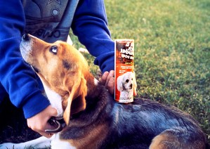 pet, beagle, behandelt, Floh, tick, Pulver