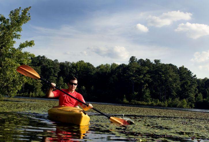 man, kayaking, lily, pad, covered, lake