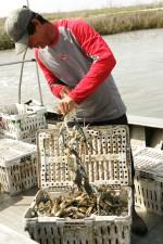 pleine, charge, crabes, jour, complète