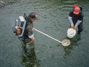 pescadores, mochila, electroshocker, capturar peces