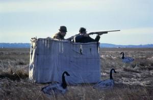camouflaged, hunters, wild, goose, wait, birds