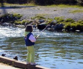 bambino, pesci, torrente