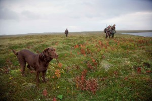 chien, winth, chasseurs, chasse