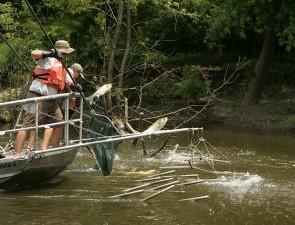 electrofishing, azijski, šaran, invazivne