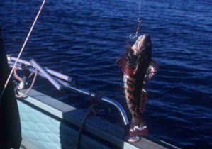 魚は、フック