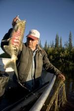 Fischer, gefangen, chum, Lachs, Fisch, oncorhynchus, Keta