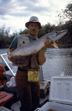 fisherman, holding, big, fish, northern pike