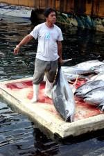 fisherman, yellow, fin, tuna