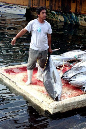 ribar, žuti, peraja, tuna