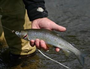 ribari, uhvaćen, Arktik, lipljan, ribe