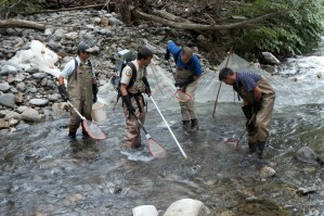 pêcheurs, endiguant, peu profonde, rapide, montagne, rivière, la capture, le poisson, net