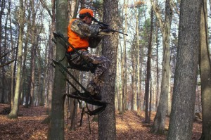 hunter, holds, eye, scope, gun, sitting, tree