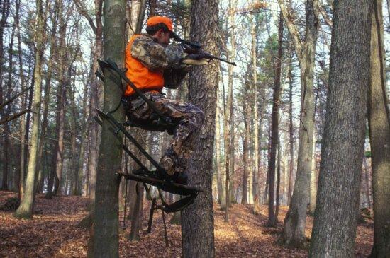hunter, holds, eye, scope, gun, sitting, tree