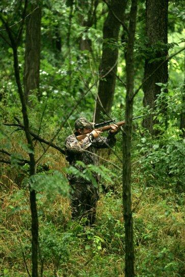 avcı, hayvan, ağaç