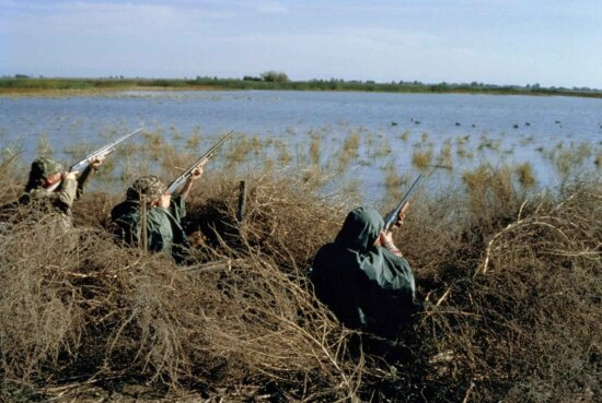 hunters, hunting, waterfowl, birds, swamp