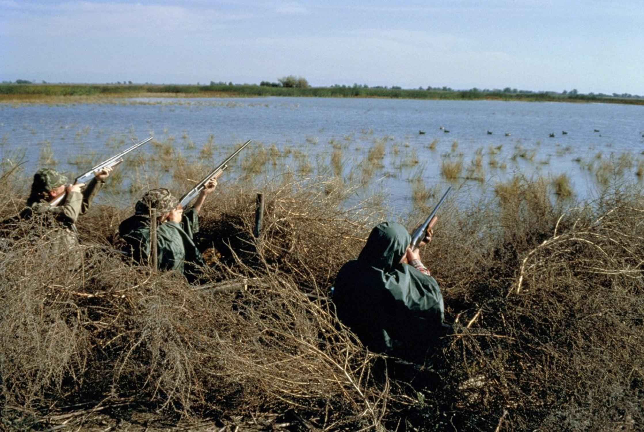 Free Picture Hunters Hunting Waterfowl Birds Swamp