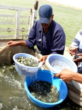 ljudi, posao, riba, farma