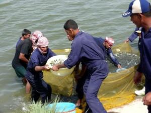 people, work, fish