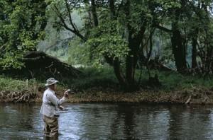 assaisonné, mouche, pêcheur, pêche, rapide, ruisseau
