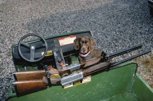 sport, hunting, rifles, hunting, dog