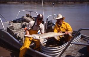two, men, boat, holding, pallid, sturgeon, fish