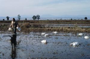yerleştirerek, su kuşları, av, avcı, yemler