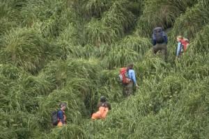 hikers, amog, high, green grass, hill