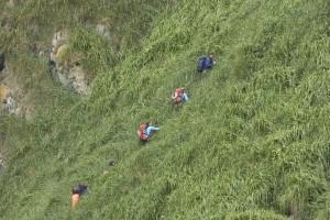 drumeţii, alpinism, tropicale, deal