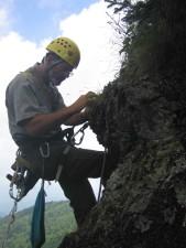 inspecting, spreading, avens, rock, face
