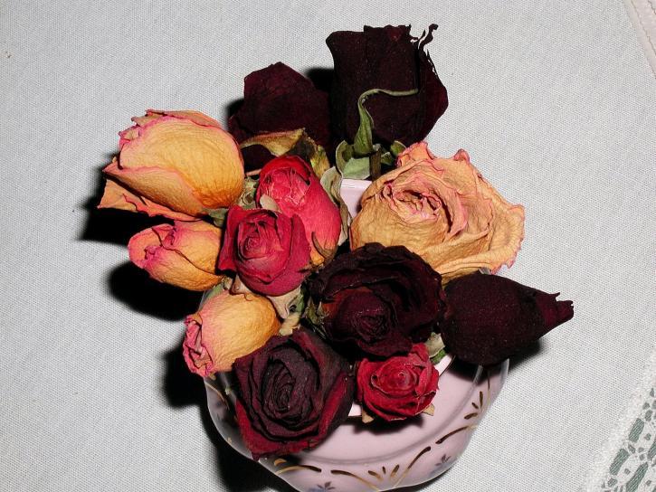 annuali, fiori