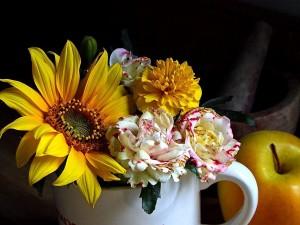 kvety, zátišia