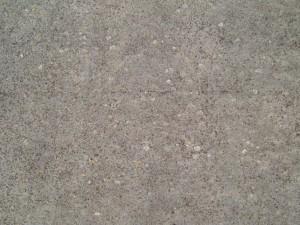 lichen, concrete