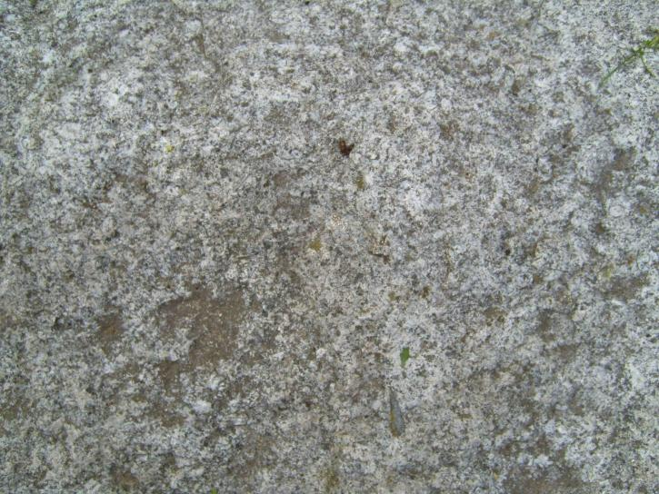 Free picture: white, fresh, concrete, texture