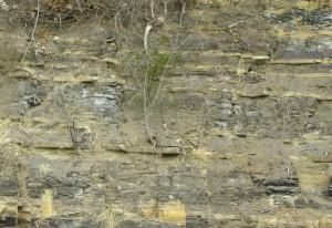 fayetteville, shale, outcrop