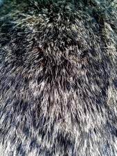 details, image, fur, rabbit