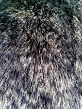 details, image, fur, rabbit