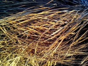 dried, grass, pattern, details