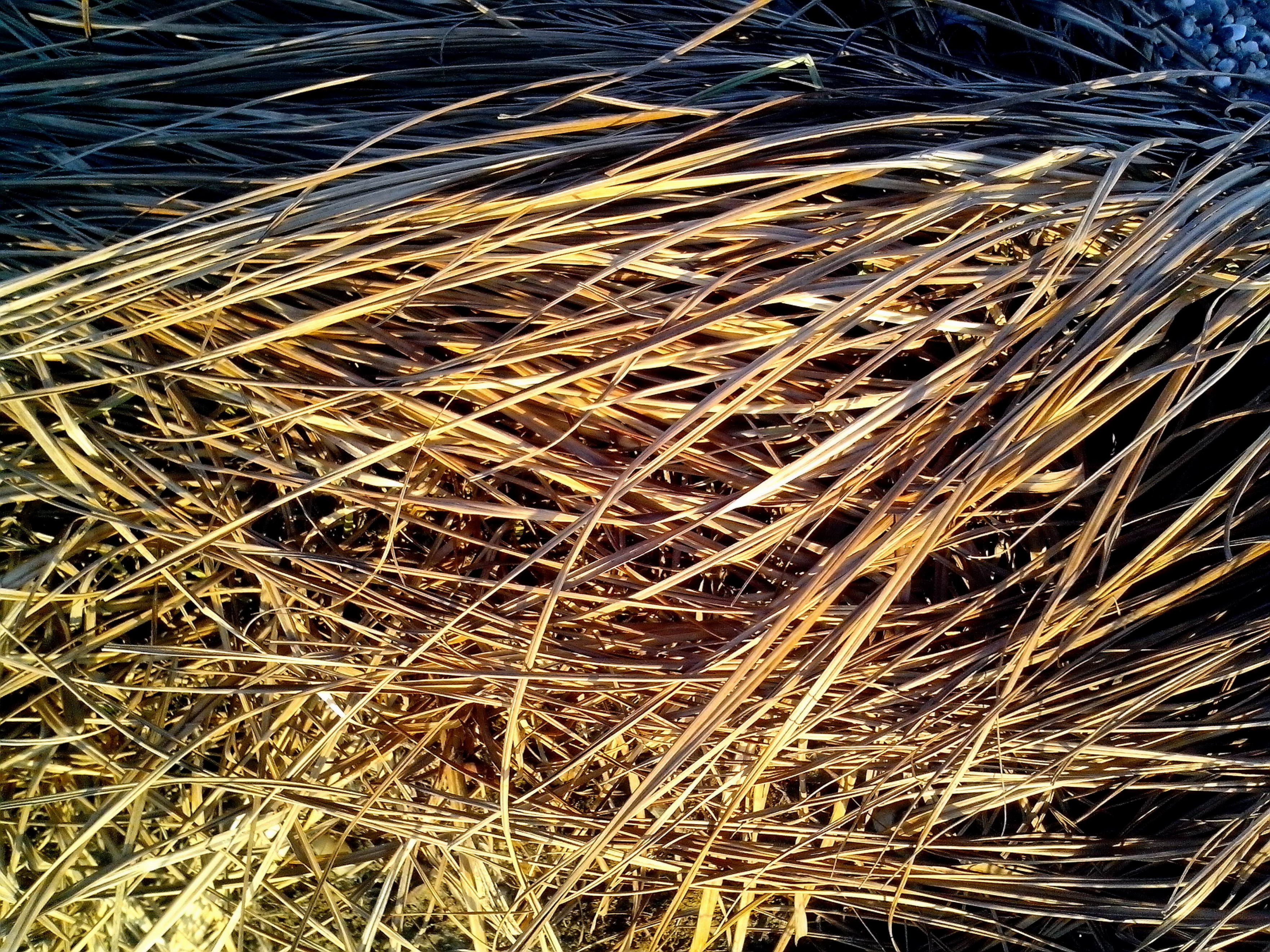 Free photograph; dried, grass, pattern, detailed