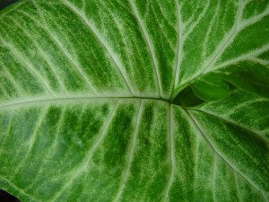 vert clair, modèle, feuille verte