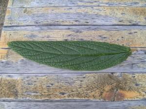 tmavé zelené, listy, drevo