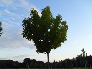 full, tree, texture