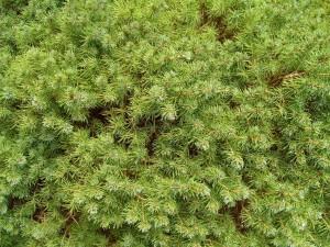 verde, suolo, cespuglio, tessitura