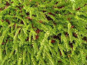 grün, Boden, Textur