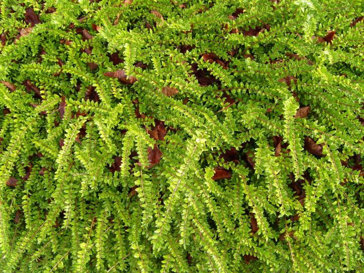 verde, suolo, tessitura