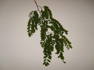 listí, listí, větve