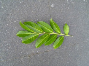leaf, leaves, branch, texture