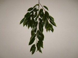 leaf, leaves, branches