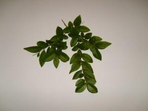 feuille, feuilles, blanc