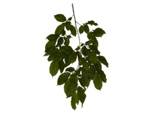 feuille, feuilles, texture