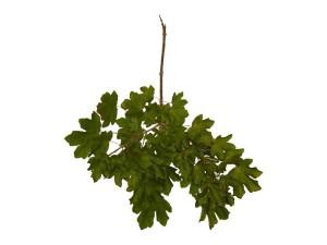 Plantas de folhas